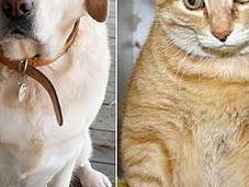 Obesità animale crescita