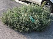 festa dell'albero (invisibile)