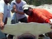 Oltre milione squali uccisi ogni anno nell'Atlantico