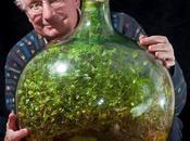 Strabiliante: piantine vivono damigiana senz' acqua anni