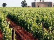 Vini Salento: Salice Salentino