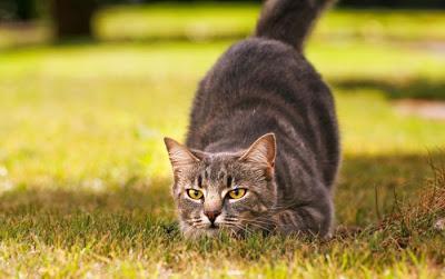 I Gatti Uccidono Miliardi Di Animali Ogni Anno Paperblog