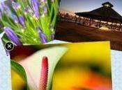 Cool Collage applicazione Windows creare collage foto