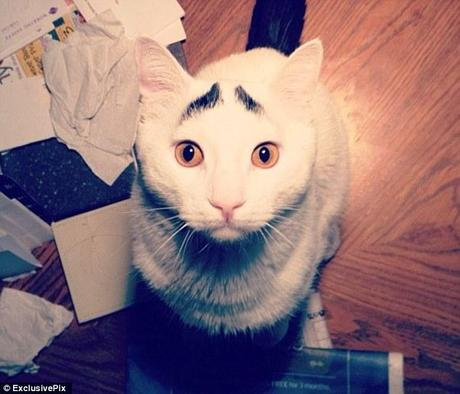 Sam the cat has become an internet hit thanks to his furr-owed brow