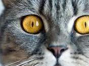 Colangite gatto :tutta verita'