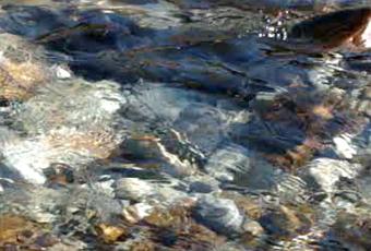 Luna di miele sul letto del fiume paperblog for Cabine sul bordo del fiume