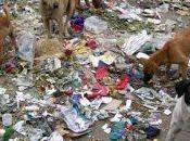 India: cane ruba 400.000 rupie