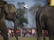 Pelé l'elefante, star match soli pachidermi