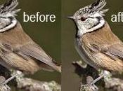 Fotoritocco animali Photoshop Strumento contrasta, Livelli Regolazione Maschera Livello