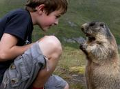Matteo, austriaco, anni: foto amiche marmotte.