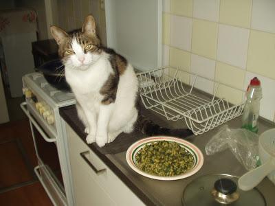 Cosa mangia un vegano pasta e spinaci paperblog - Cosa mangia un cucciolo di talpa ...