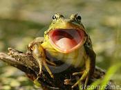 Littizzetto: rana dalla bocca larga.
