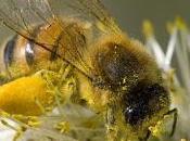 Pesticidi agiscono sulla memoria delle