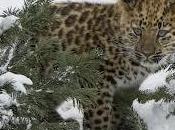 Video Animali d'estinzione. specie rischio