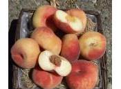 Frutti antichi dimenticati? Scopriamoli nuovo