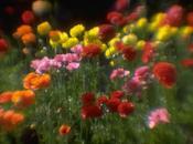 avvicina primavera...