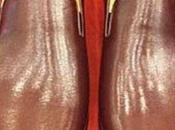 Benedetto XVI, oggi ultimo giorno Papato: scarpe diventano marroni [Foto]