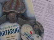 """""""Una piccola grande tartaruga"""": libro raccontare misterioso viaggio delle Caretta caretta"""