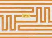 Marzo: microchip obbligatorio negli