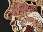 Anatomia carta giapponese