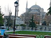 Istanbul, città gatti