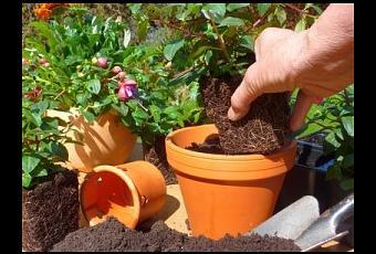 Ortaggi rampicanti per terrazzo piselli fagioli e - Rampicanti a crescita rapida ...