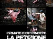 Fermiamo mattanza cani gatti bolliti vivi Cina Corea