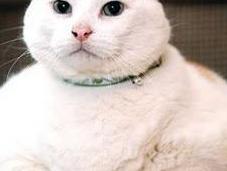 Prince Chunk (1998-2010)