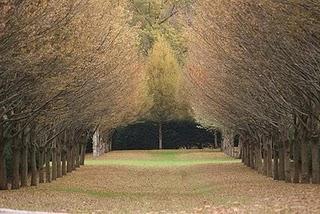 i viali alberati venivano usati per creare effetti ottici ad arte