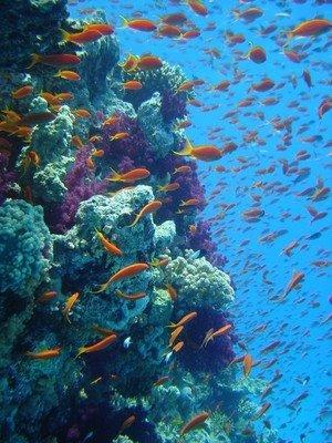 Una vista del Fiji Great Sea Reef