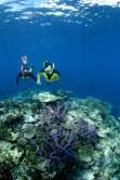Snorkelling sul Great sea Reef da Nukubati Island Resort