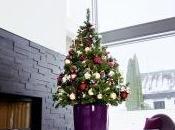 sfida Natale albero vero finto