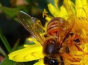 miele Salento leccese