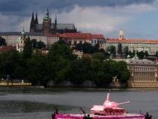 Praga pesci tropicali Havel, ricerca valori aggrapparsi
