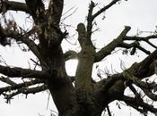 Capitolo grande albero chioma mezza secca