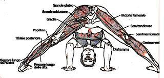 hatha yoga prasarita padottanasana postura del profondo