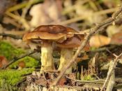 Funghi saltati padella