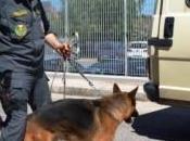 Aeroporto Roma Fiumicino sequestrati chili cocaina