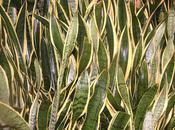 piante ideali purificare casa