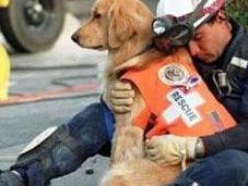 Sono cani eroi