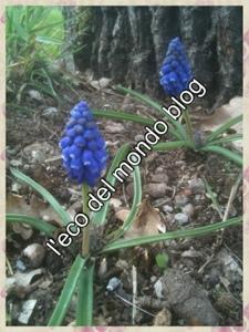 Cosa seminare ad aprile sul balcone e nell 39 orto bieda for Cosa seminare a febbraio