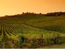chianti: vino, paesaggio poesia