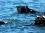 Costa Concordia Sommozzatore cadavere nella cabina
