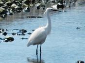 mondo birders