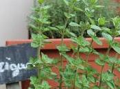 piccolo angolo profumi sapori: erbe aromatiche