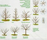 Alberi e piante da frutto come sceglierle paperblog for Potatura alberi da frutto