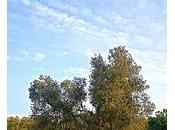 lebbra dell'olivo provocata fungo invece dell'uomo batterio