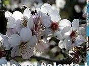Mandorlo Salento leccese: fiore senza frutto