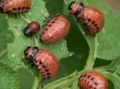 insetti nutrono delle radici nostre piante!