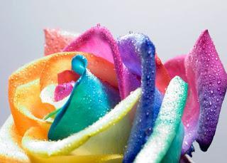 I fiori modi di dire proverbi e linguaggio paperblog for I fiori della balsamina